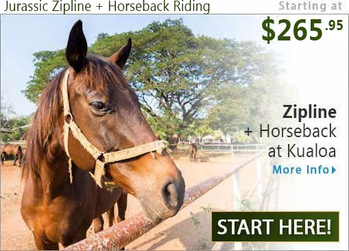 Zipline plus Horseback Riding