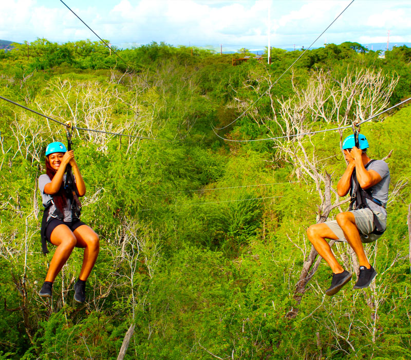 Race your friends on the Ziplines